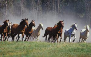 locuri de munca ferma de cai
